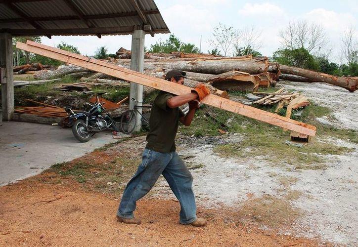 El estado de Quintana Roo tiene una vocación forestal desde hace varios años, pero los ejidos necesitan del apoyo. (Edgardo Rodríguez/SIPSE)