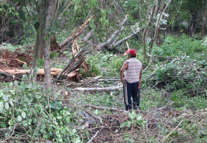 La Profepa sancionó a 17 organismos forestales; les suspendió los apoyos federales. (Benjamín Pat/SIPSE)