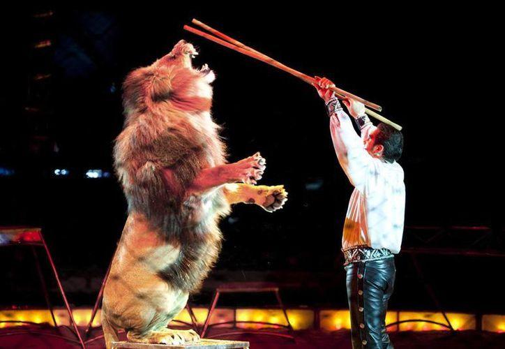 Los espectáculos que presenten animales deberán solicitar autorización a la Oficina Veterinaria alemana.  En la imagen, una escena de uno de los circos alemanes más populares, el Circus Krone. (germany.travel)