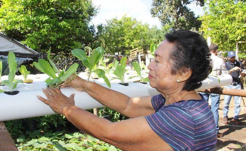 Los ciudadanos están interesados en producir sus alimentos. (Archivo/Sipse)