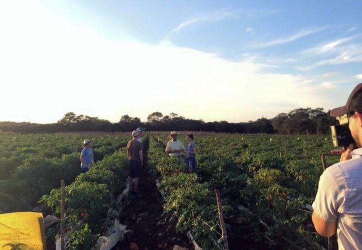 La chef Pati Jinich visitó plantaciones de chile habanero en Yucatán. La transmisión de Pati's Mexican Table será en septiembre a través de la cadena PBS. (Facebook Pati Jinich)