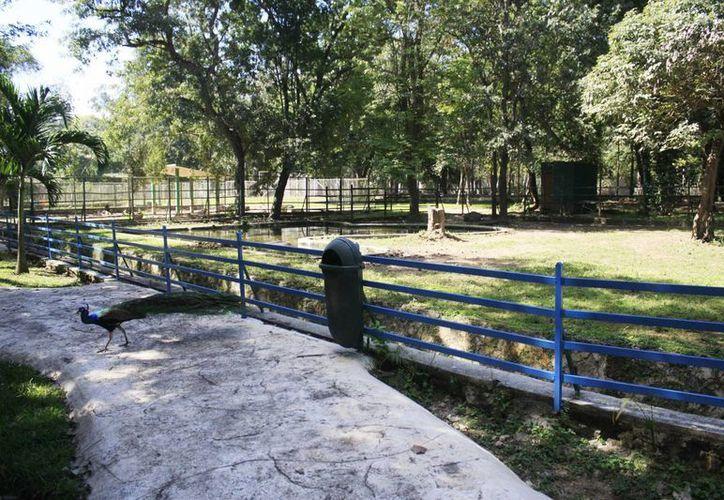 Entre las denuncias interpuestas por el Ayuntamiento está la del robo de animales del zoológico.  (Harold Alcocer/SISPE)