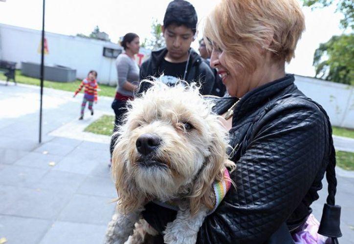 El objetivo es tener una regularización y evitar la venta de animales en la vía pública. (Excelsior)