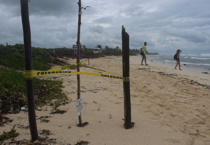 Se han registrado nidos de tortugas en litorales de la cabecera municipal. (Sara Cauich/SIPSE)