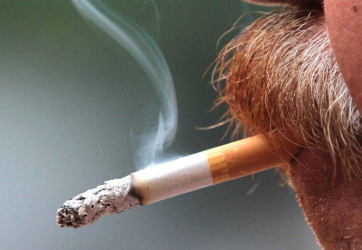 En México mueren a diario unas 130 personas por afecciones relacionadas al tabaquismo. (Notimex)