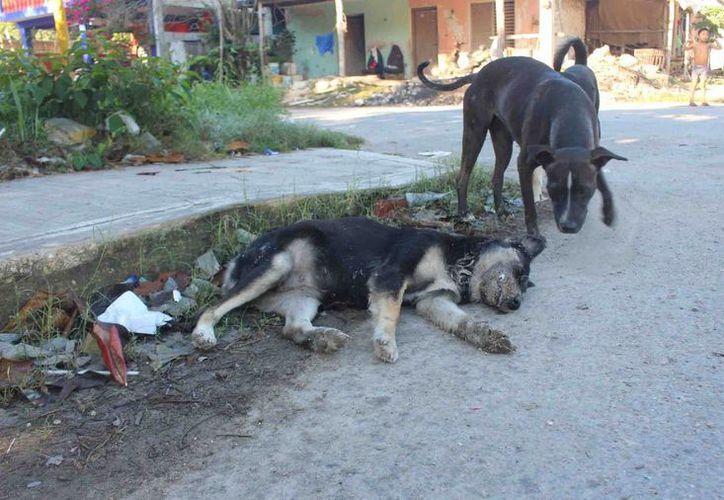 Se calcula que 15 animales fueron envenenados con un pedazo de pan. (Foto: Jesús Caamal/SIPSE)