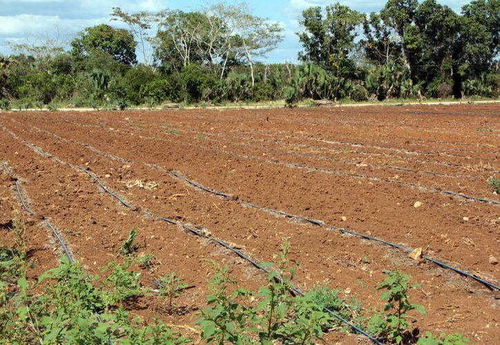 El recorte al presupuesto de la Conagua impactará en las obras hidroagrícolas. (Milenio Novedades)