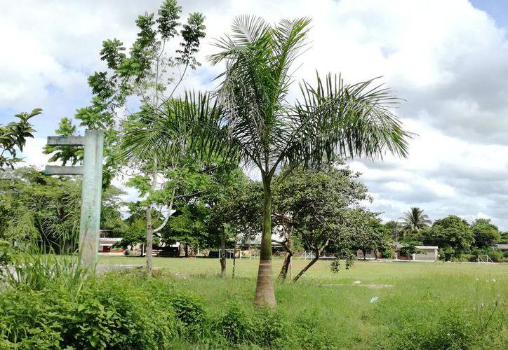 Las plantas vendrían de Tabasco, donde cuestan alrededor de $50 cada una. Se consideran 150 matas por hectárea. (Jesús Caamal/SIPSE)