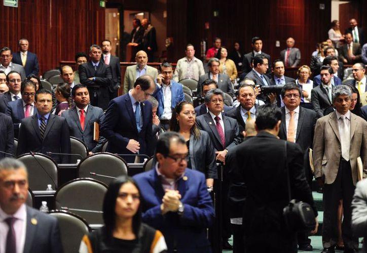 Las ganancias que deja a las empresas utilizar delfines como parte de espectáculos, en especial en la Riviera Maya, dividió a los grupos parlamentarios. (Noticias MVS)