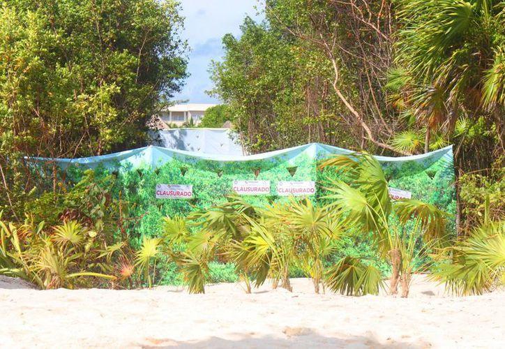 Se cree que sin permiso el centro de hospedaje removió palma chit y manglares para extender sus  playas, por lo que ahora deberán presentar pruebas a favor de la devastación. (Daniel Pacheco/SIPSE)