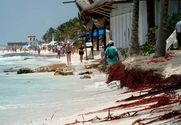 La construcción de edificios ha sepultado dunas costeras de Playa del Carmen. (Octavio Martínez/SIPSE)