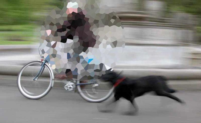 El ciclista de 46 años perdió la vida en el lugar del accidente. (Foto de contexto:  mundomascotas.info)