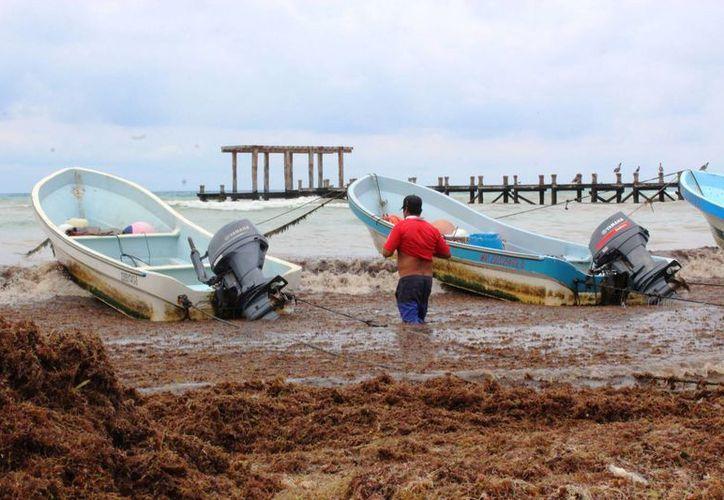 El lunes las playas de la zona conocida como El Recodo amanecieron con sargazo. (Octavio Martínez/SIPSE)