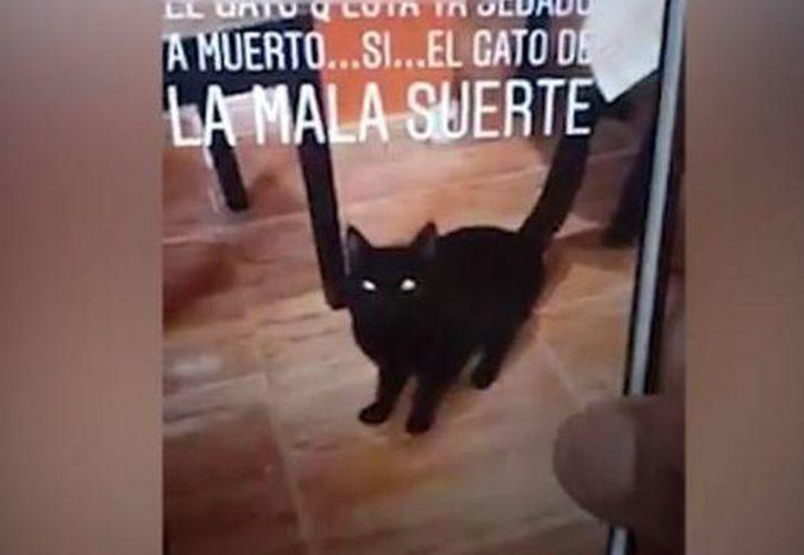 En las imágenes se ve como el pequeño gato sobrevivió al primer lavado. (Milenio)