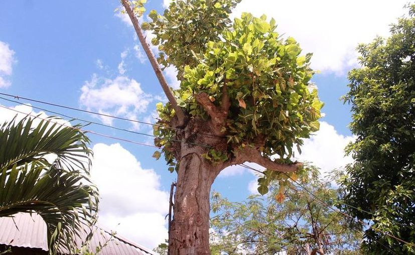 La sobrecarga del sistema eléctrico causa bajas de energía en gran parte de la comunidad. (Edgardo Rodríguez/SIPSE)