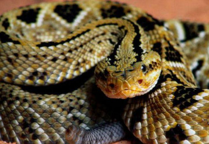 Los agentes que incautaron a estos animales encontraron además 19 huevos de serpiente. (Zoológico de Chapultepec)