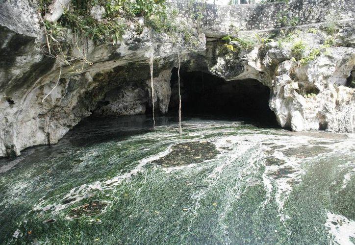 En uno de los cenotes que se encuentra cerca del lugar se estancó una capa gruesa de agua residual. (Octavio Martínez/SIPSE)