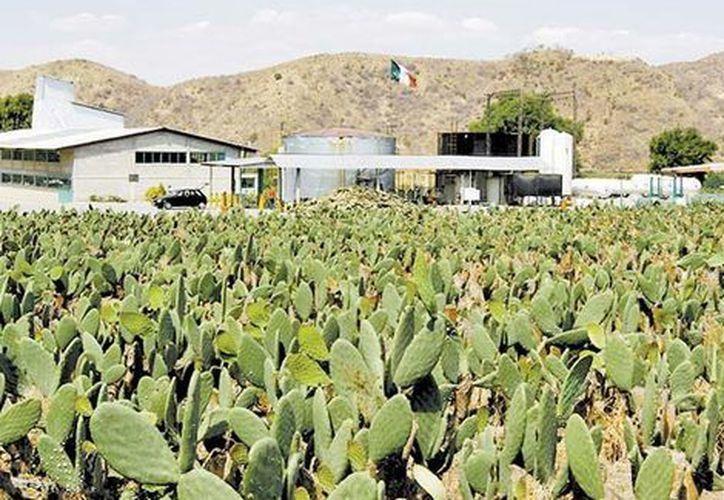 Nopalimex va abastecer con este combustible a las patrullas, ambulancias y autos de las áreas administrativas del gobierno de Zitácuaro. (Milenio).