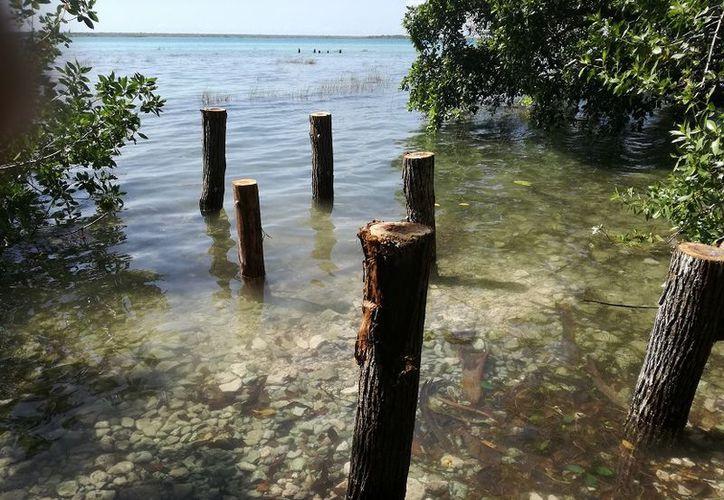 Un grupo de prestadores de servicios se ha encargado de llevar troncos a la zona. (Javier Ortiz/SIPSE)