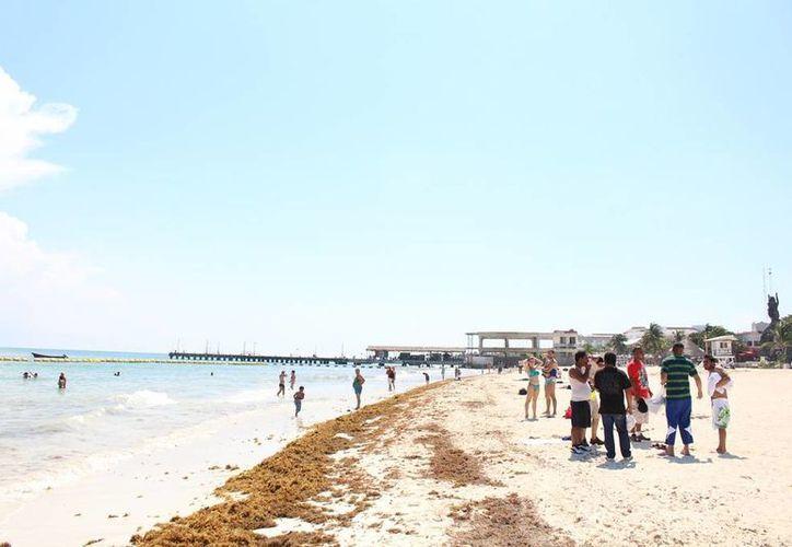 Según prestadores de servicios turísticos, la presencia del sargazo en las playas provoca que los bañistas no quieran entrar al mar. (Irelis Leal/SIPSE)