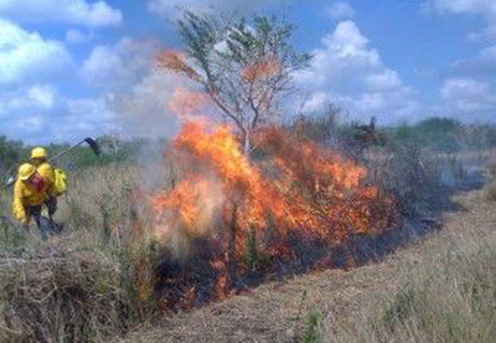 Sólo tres municipios no han registrado incendios en el Estado. (Juan Rodríguez/SIPSE)