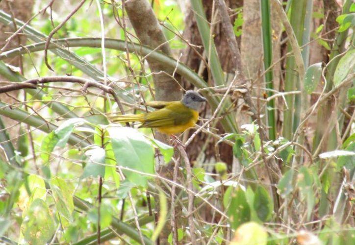 En Yucatán se puede observar gran variedad de aves. (SIPSE)