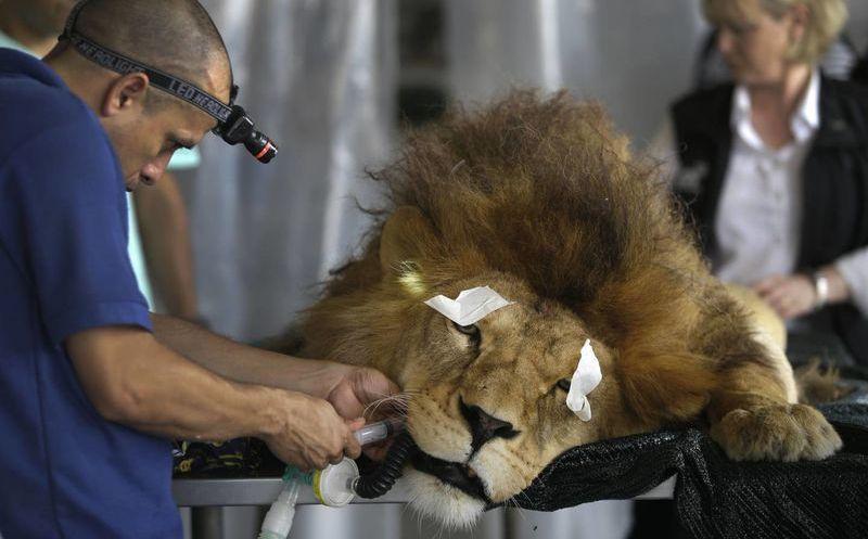 Resultado de imagen para veterinaria circos