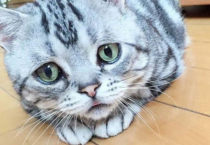 Tres hombres fueron condenados a la cárcel por matar a un gato al arrojarle agua hirviendo mientras el animal estaba enjaulado. Además filmaron el hecho. (Agencias/Archivo)