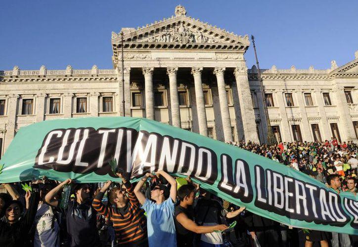 La nueva ley uruguaya permitirá la exploración de las propiedades médicas del cannabis. En la imagen, activistas a favor de la marihuana celebran su legalización frente al Parlamento, en Montevideo. (EFE/Archivo)