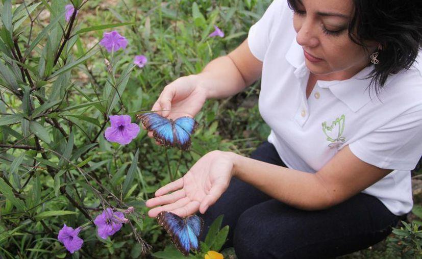 """""""Cuenta una leyenda que si quieres un deseo, se lo cuentes a una mariposa y cuando la liberas, vuela para buscar a Dios y comunicarle tu petición"""", comentó  Yara Karina Vázquez Maldonado. (Milenio Novedades)"""