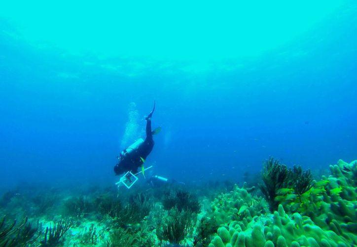 La instalación de Palafitos y la recuperación de playas con arrecifes artificiales dañarían la costa marítima. (Octavio Martínez/SIPSE)