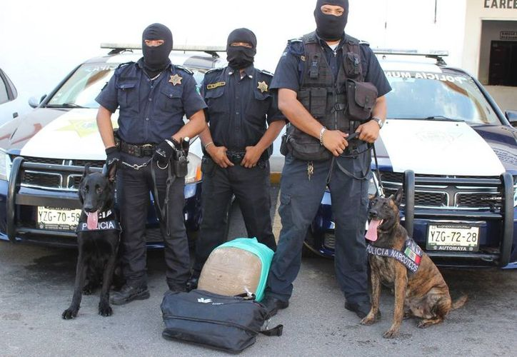 Los oficiales K-9 Niky y Nees descubrieron que en una maleta de la zona de paquetería de la Central de Autobuses CAME, en el centro de Mérida, había 12.3 kilos de marihuana. (Fotos: cortesía de la PMM)
