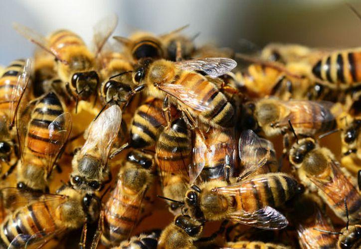 El poblado de Sergio Butrón Casas solicitaba auxilio ya que un enjambre de abejas africanas había atacado a varias personas. (Foto: Contexto/Internet)