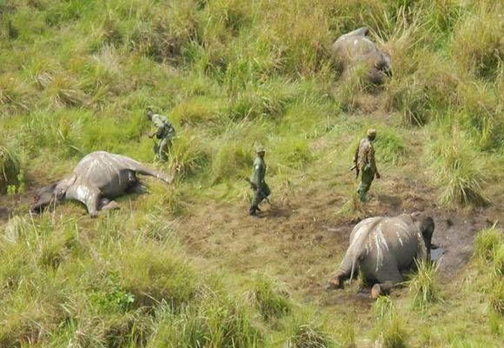 Los cazadores atacaron a los vigilantes del Parque Nacional Garamba. Imagen de contexto. (African Parks)