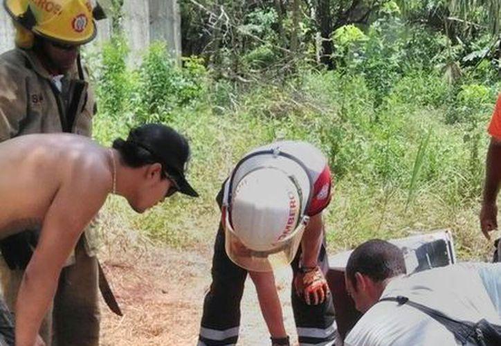 'Negrita', una perrita de la colonia Ejidal Sur, de Playa del Carmen fue encontrada muerta el lunes. (Adrián Barreto/SIPSE)