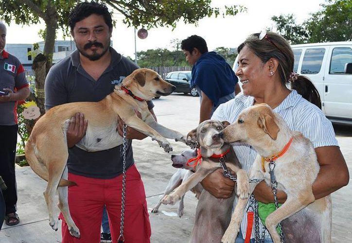 Cerca de un millar de mascotas han sido atendidas desde el 11 y lo seguirán hasta el día 13 del presente mes en el parque ecológico de la asociación Hunab Proyecto de Vida, en el marco de la VII Campaña de Esterilización. (Milenio Novedades)