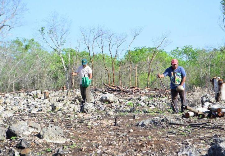 Este martes se aprobó la primera ley de desarrollo forestal en Yucatán. (Milenio Novedades)