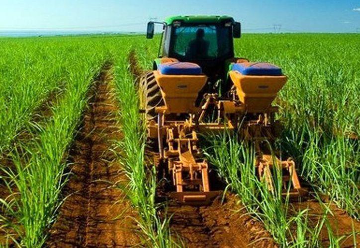 La convocatoria es para emprendedores con proyectos agroindustriales. Imagen de contexto de un plantío y un tractor. (Milenio Novedades)