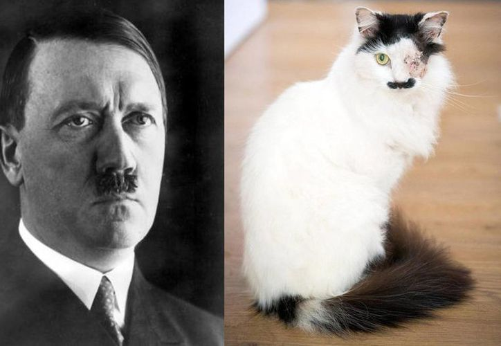 La mujer dijo que mucha gente le dice que Baz se parece a Hitler, pero asegura que su gato es muy tímido y gentil. (AP/schnauzi.com)