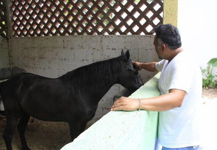 La alimentación del caballo y los cuidados son muy caros. (Tomás Álvarez/SIPSE)
