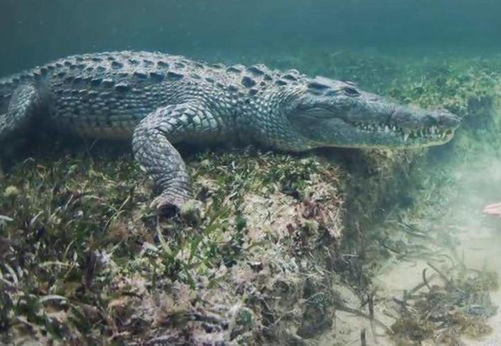 La modelo mencionó que pasó 10 horas nadando con estos animales, durante 5 días. (Redacción/SIPSE)