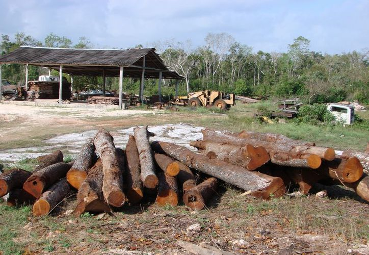 Piden investigar el destino de los productos forestales maderables mediante la verificación de procedencia. (Tomás Álvarez/SIPSE)