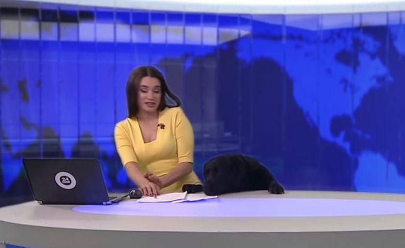 El can saltó a la mesa en la que se encontraba la presentadora. (Foto: YouTube)