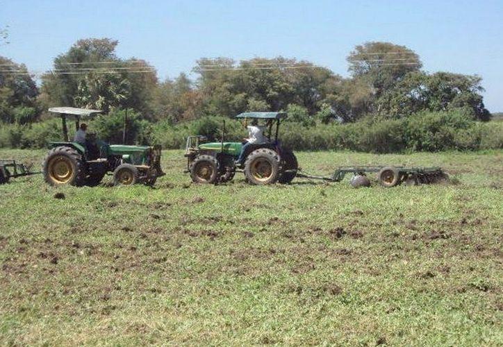 Los menonitas continúan preparando tierras para cultivos. (Javier Ortiz/SIPSE)