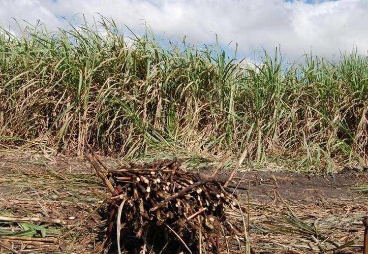 Se abordarán casos como: pérdida de hábitat, especies invasoras, sobreexplotación, contaminación, cambio climático y la agricultura mal planeada. (Redacción/SIPSE)