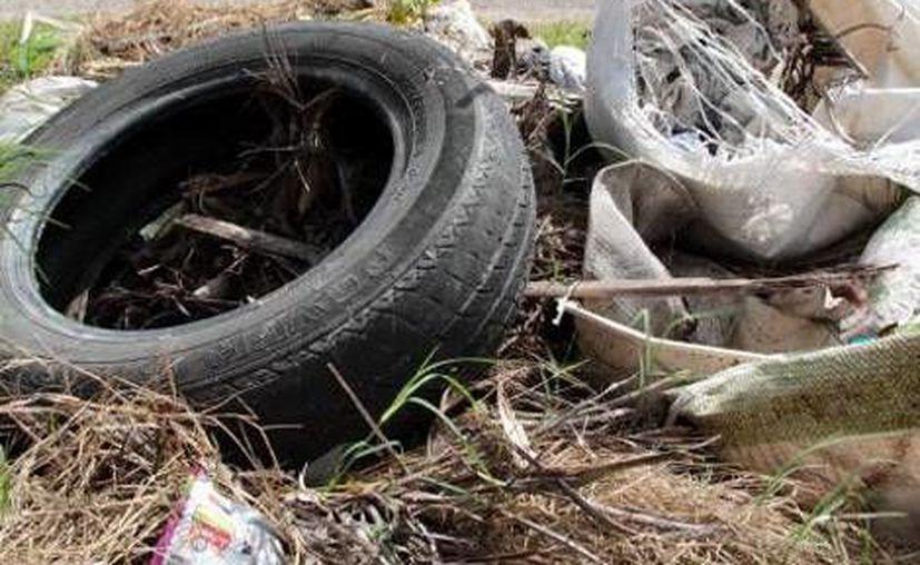 """Las acciones de limpieza se realizaron en el marco de la campaña """"Por un municipio libre de vectores"""". (Archivo/SIPSE)"""