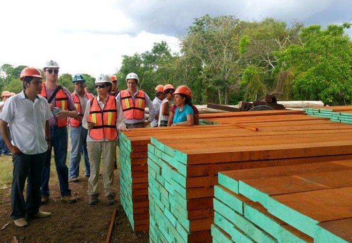 Determina los impactos directos del buen manejo forestal (Edgardo Rodríguez/ SIPSE)