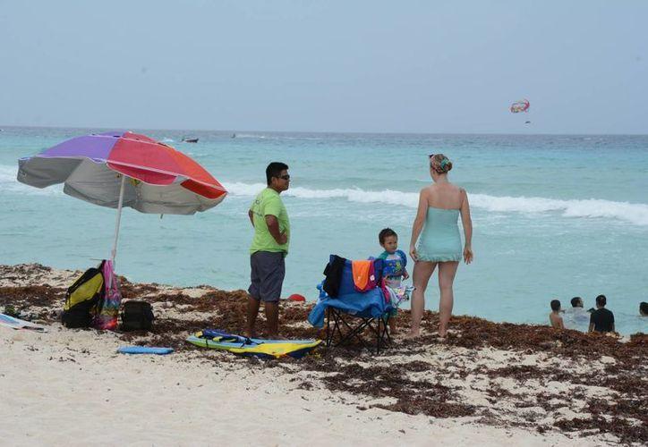 El sargazo llega a la orilla del mar en grandes cantidades. (Tomás Álvarez/SIPSE)