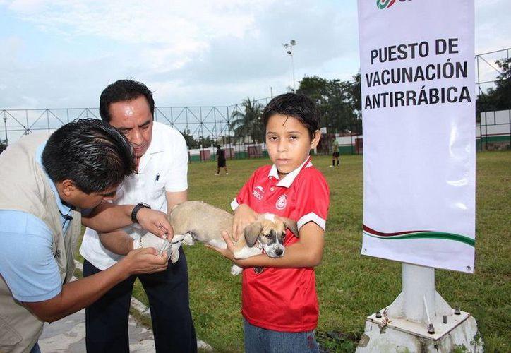 Se instalarán 145 puestos de vacunación antirrábica en el municipio de Othón P. Blanco y 53 puestos en el municipio de Bacalar. (Redacción/SIPSE)