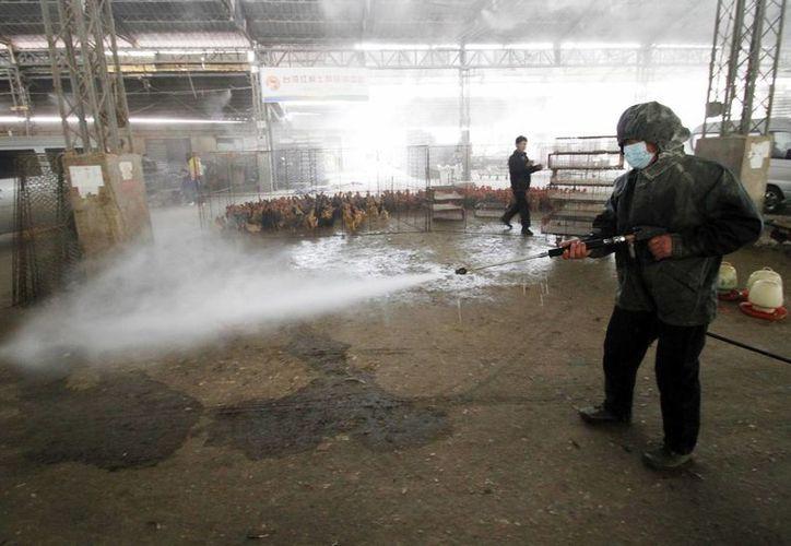 Un operario desinfecta un mercado de China ante la nueva cepa del virus de la gripe aviaria H7N9. (EFE)